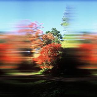 100_westonbirt_arboretum_i_350px.jpg