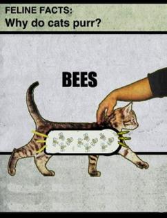 3cf3aae1e46049cc2531c02af7b779d0-cat-facts-kitty-cats.jpg