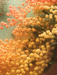 owen-silverwood-bloom-stilllife-6.jpg?zoom=2-w=770