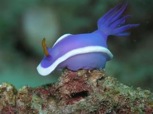 sea_slug6.jpg