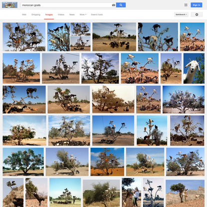 moroccan goats - Google Search