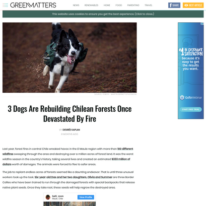 3 Dogs Are Rebuilding Chilean Forests Once Devastated By Fire