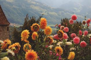 Flowers & Color