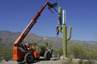 cell-phone-tower-disguised-as-a-cactus-1.jpg?w=640-h=426