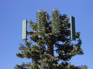 cell_tower_goofy_disguise_top_of_tree_hogback_jurassic_park_and_ride_roger_wendell_02-28-2009.jpg
