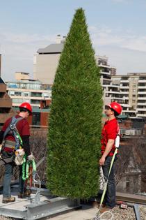 italian-cypress_rooftop_concealment_cellular_bell-canada_003.jpg