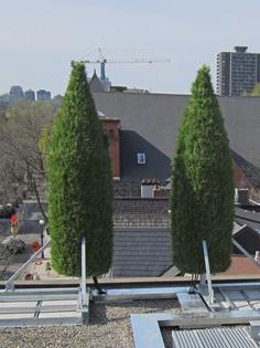 italian-cypress_rooftop_concealment_cellular_bell-canada_002.jpg