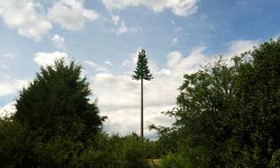 charlotte-tree-tower1.jpg