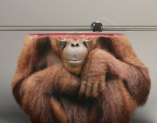 young-rubicam-ifaw-campaign-3d-printed-animals-designboom-13.jpg