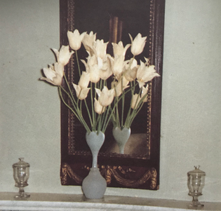 White lily-flowered tulips