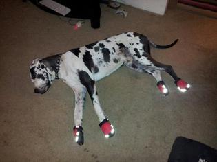 grip-trex-dog-boots-by-ruffwear-red-currant-8881.jpg