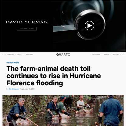 The farm animal death toll continues to rise in Hurricane Florence floods