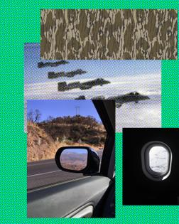 mossy-warthogs-window-mirror.jpg