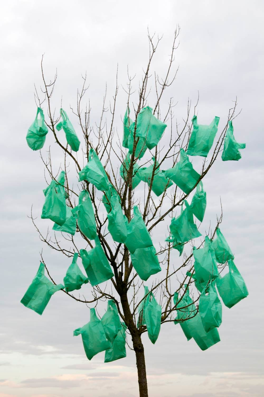 arbreplastic