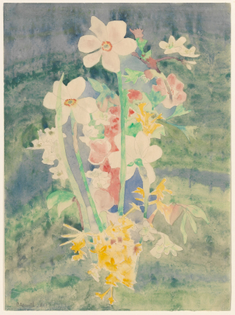 Charles Demuth, Narcissi, 1917