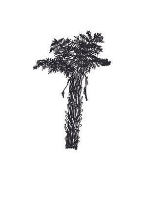 ponga-scan.pdf