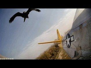 Hawk Chases, Attacks, Crashes GWS Pico Moth, Formosa, HobbyKing P-51D Mustang