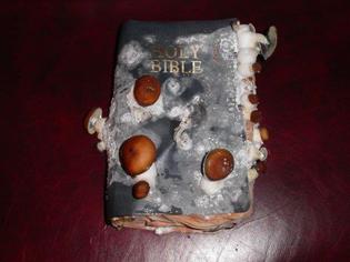p.-cubensis-growing-on-a-bible-imgur.jpg