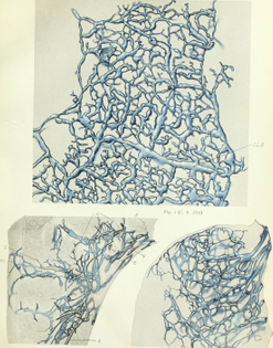 contributions_to_embryology_-20689887595-.jpg