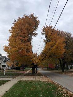 """Amazing utility co. topiary in suburban Chicago."""