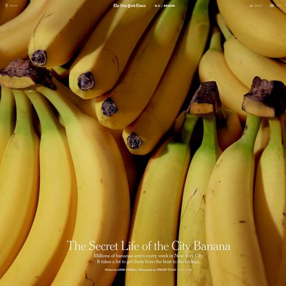 The Secret Life of the City Banana