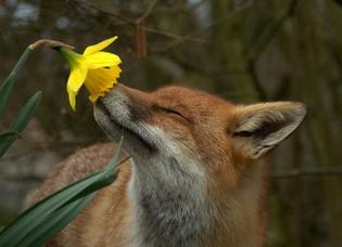 flower-hound.jpg
