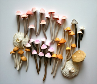 mushrooms pink
