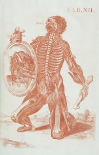 Tabulae Anatomicae, (Rome, 1788). BERRETTINI, Pietro da (1596-1669).