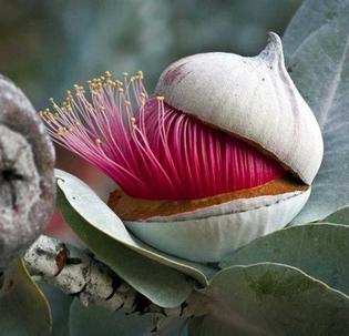 9-eucalyptus.jpg