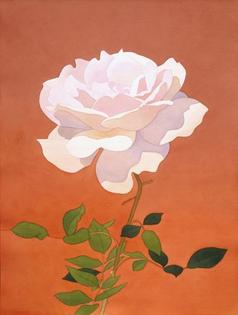 mark-adams-pale-pink-rose-on-orange-background.jpg