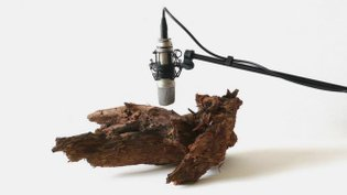 Zimoun : 25 woodworms, wood, microphone, sound system, 2009