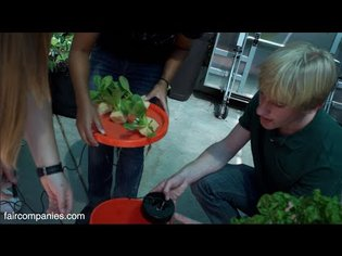 automated aeroponics garden kit