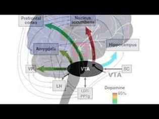 What is dopamine?