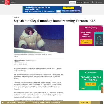 Stylish but illegal monkey found roaming Toronto IKEA