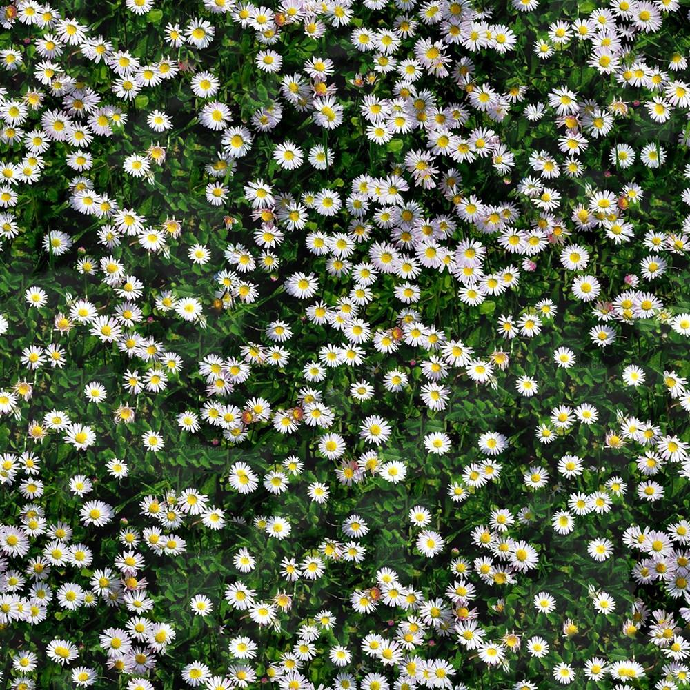 13_flowery-meadow-texture-seamless.jpg