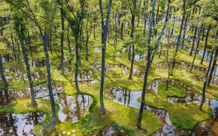 junya-ishigami-water-garden-art-biotop-nasu-giappone-620x388.jpg