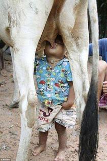 boy drinking cow breast milk