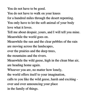 mary-oliver-wild-geese.png