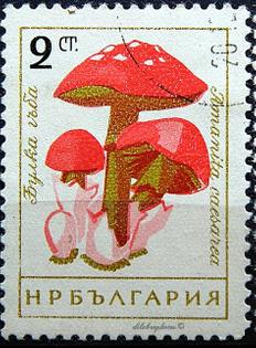 7cdb79523e2b7eecd8b9c7caa885f60d-fungi-bulgaria.jpg