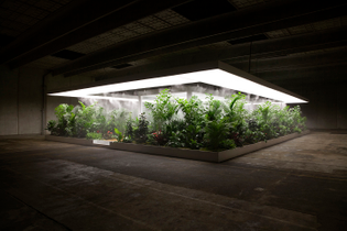 installation-view-of-doug-aitken-the-garden-2017.-photograph-by-doug-aitken-workshop.-courtesy-the-artist-and-aros-aarhus-ku...