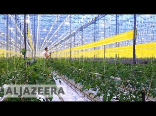 Dutch scientists close to 'breakthrough' method of growing crops in deserts