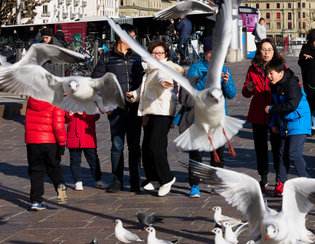 Pigeons - in a hurry.