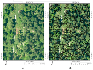 forests-07-00122-g004.png