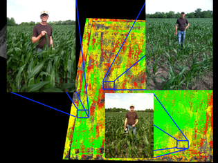 dvi_corn_field_with_ground_truthing.png