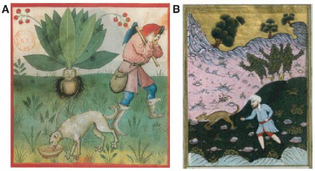 harvesting-mandrake-with-the-help-of-a-dog-a-latin-th-9333-folio-37-xv-century.png