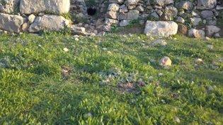09 boulders cave sahar