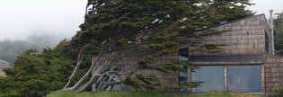 organic-architecture.jpg