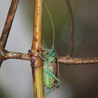 Jim Wilson | God's Chorus of Crickets | crickets audio recording slowed way down by acornavi
