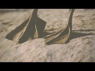 Aphex Twin - Qkthr