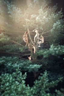 tree-3-2003.jpg